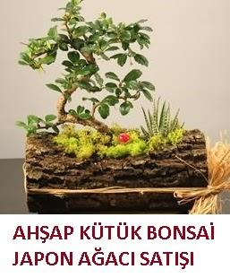 Ahşap kütük içerisinde bonsai ve 3 kaktüs  Ankara 14 şubat sevgililer günü çiçek