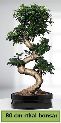 80 cm özel saksıda bonsai bitkisi  Ankaraya çiçek yolla