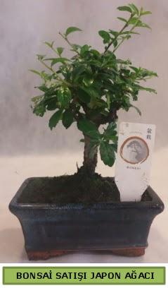 Minyatür bonsai ağacı satışı  Ankara çiçekçi telefonları