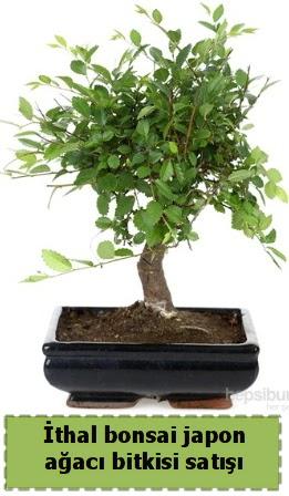 İthal bonsai saksı çiçeği Japon ağacı satışı  Ankarada çiçek gönderme sitemiz güvenlidir