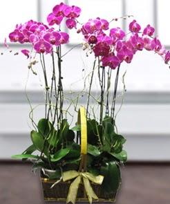 7 dallı mor lila orkide  Ankara İnternetten çiçek siparişi