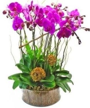 Ahşap kütükte lila mor orkide 8 li  Ankara hediye sevgilime hediye çiçek