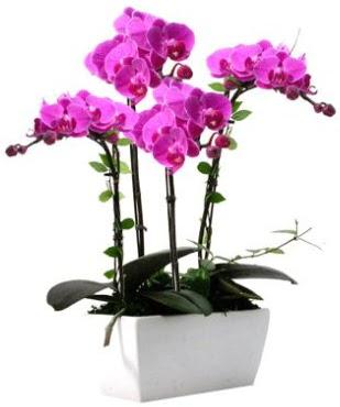 Seramik vazo içerisinde 4 dallı mor orkide  Ankara çiçek , çiçekçi , çiçekçilik