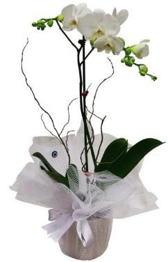 Tek dallı beyaz orkide  Ankara güvenli kaliteli hızlı çiçek