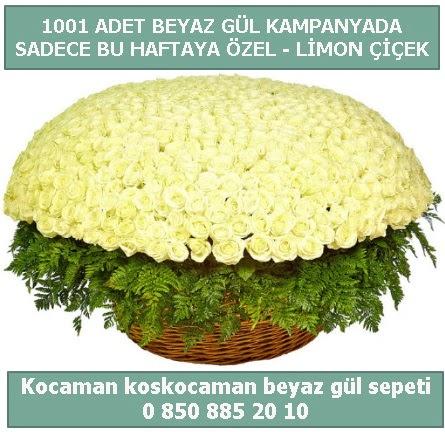 1001 adet beyaz gül sepeti özel kampanyada  Ankara İnternetten çiçek siparişi