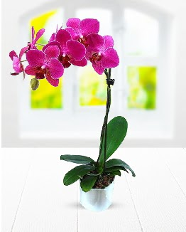 Tek dallı mor orkide  Ankara çiçek , çiçekçi , çiçekçilik