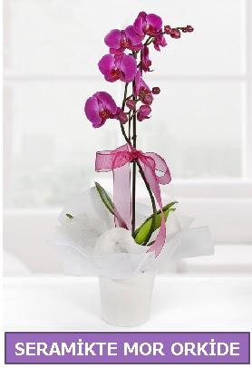 Seramik içerisinde birinci kalite tek dallı mor orkide  Ankarada çiçek gönderme sitemiz güvenlidir
