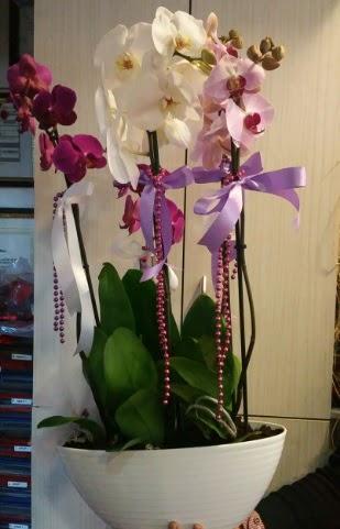Mor ve beyaz ve pembe 6 dallı orkide  Ankara çiçek satışı