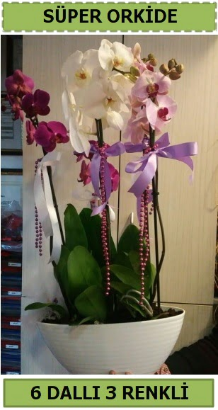 6 dallı 3 renk özel vazoda orkide çiçeği  Ankara çiçek , çiçekçi , çiçekçilik