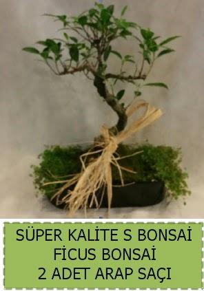 Ficus S Bonsai ve arap saçı  Ankaraya çiçek yolla