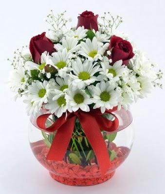 Fanusta 3 Gül ve Papatya  Ankara hediye sevgilime hediye çiçek