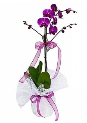 Tekli Mor Orkide  Ankara çiçek gönderme