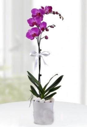 Tek dallı saksıda mor orkide çiçeği  Ankara çiçek online çiçek siparişi