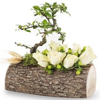 Doğal kütükte bonsai ağacı ve 7 beyaz gül  Ankara İnternetten çiçek siparişi