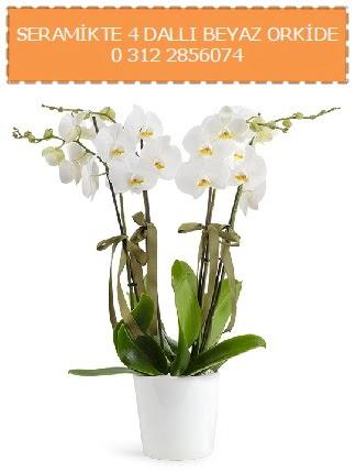 Seramikte 4 dallı beyaz orkide  Ankara çiçek online çiçek siparişi