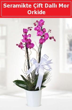 Seramikte Çift Dallı Mor Orkide  Ankara çiçek siparişi sitesi