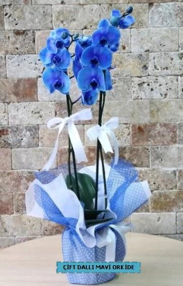 çift dallı ithal mavi orkide  Ankara çiçek gönderme
