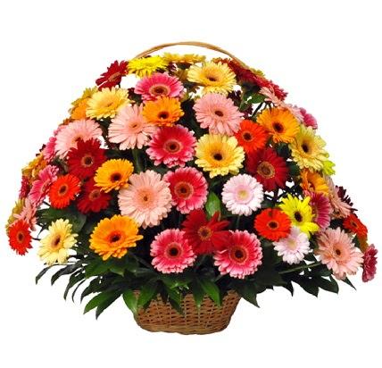 Karışık renkli büyük gerbera sepet aranjmanı  Ankara İnternetten çiçek siparişi