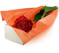 Ankara çiçek siparişi vermek  Kutuda tek gül özel kisilere